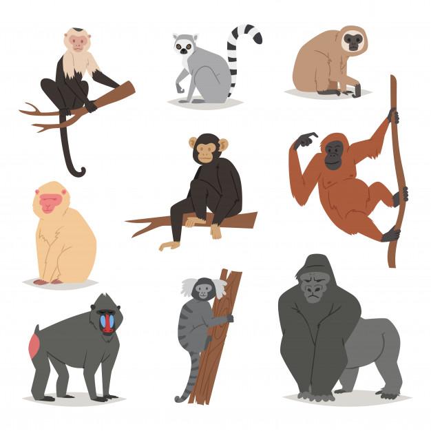 9 cartoon primate species